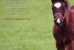 scott-equine-services-web-site-example-2