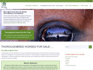 thoroughbred-horses-for-sale-web-example